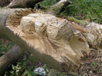 Bugs carved into tree stump