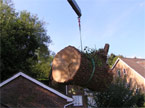 A massive segment of tree hanging from the hiab is lowered onto the back of the lorry