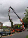 The jib of the crane extended roughly 10 metres, taking the strain erady for a massive section of the tree to be removed