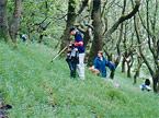 A group of students cleaning up the hillside at Cefn Coed Rhychdir