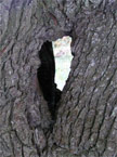 Another unusual hole in a tree trunk