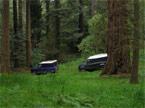 Two Landrover Defenders under forest canopy