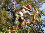 An operator standing upon a branch chopping a limb off with a handsaw